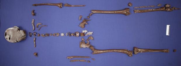 Nordijska mitologija Gorm 3D skelet